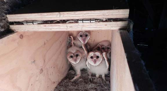 4 chicks in a box