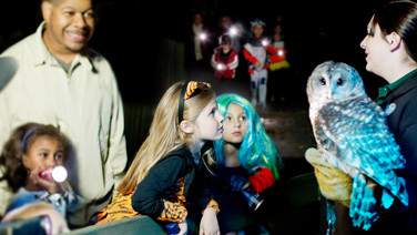 Girls in costume observing zoo employee holding an owl while girl in the background holds a flashlight.