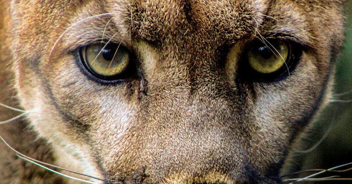 Homepage | ZooAmerica